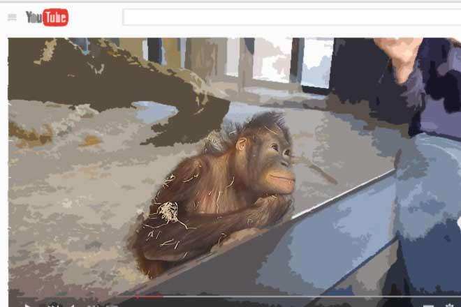 かわいくておもしろい...(n5)<br>Funy and cute chimpanzee