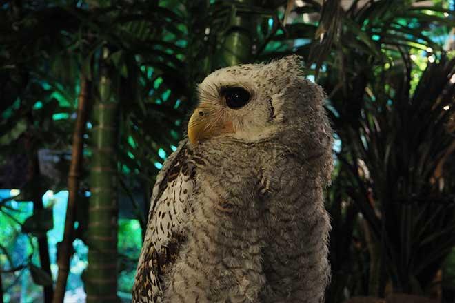 フクロウカフェに行ってみた...(n4)<br>Owl Cafe