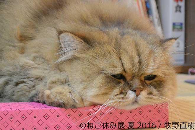 ねこの写真...(n4)Photos of cats